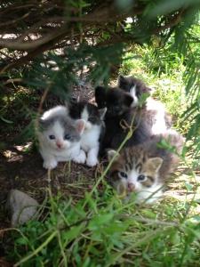 litterofcats